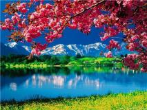 """КАРТИНА ПО НОМЕРАМ PAINTBOY """"Сакура на фоне озера и гор"""" /40х50/"""